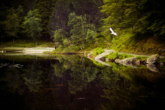 lac au coeur de la forêt