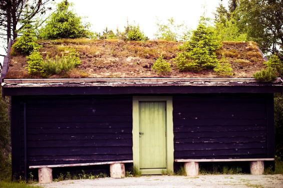 cabane et végétation de toiture