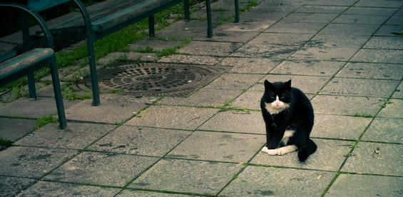 a cat in the street