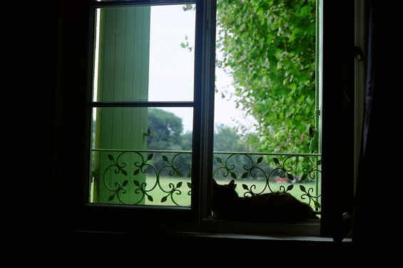 cat and window <3