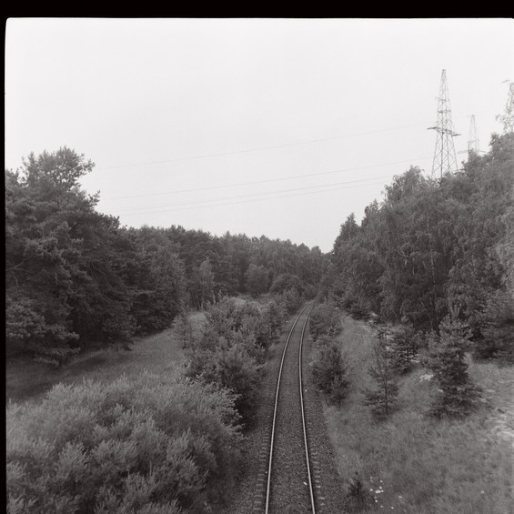 forest and train
