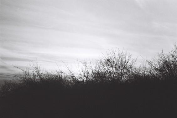 coucher de soleil sur la forêt