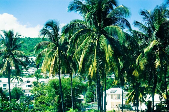 Forêt de Palmiers