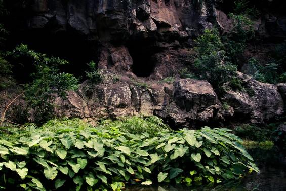entre roche volcanique et verdure