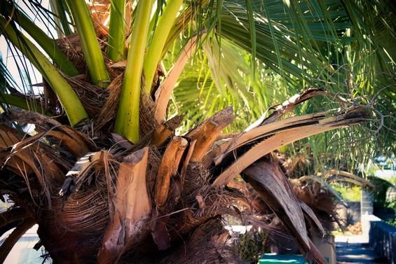 végétation de palmiers