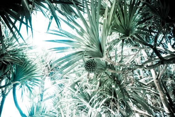 La végétation réunionnaise