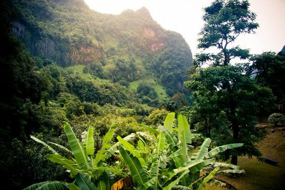 palmier et parois rocheuses