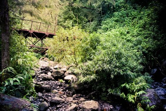 végétation et vieux pont de fer