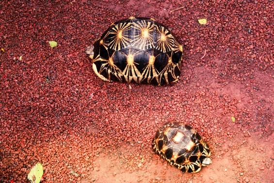 tortues du jardin !