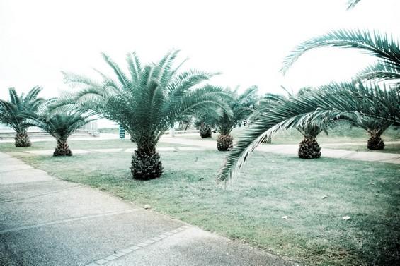entre sable et palmiers