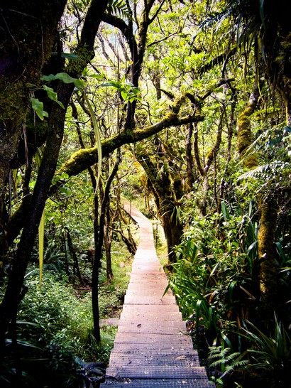 végétation sauvage à la Reunion