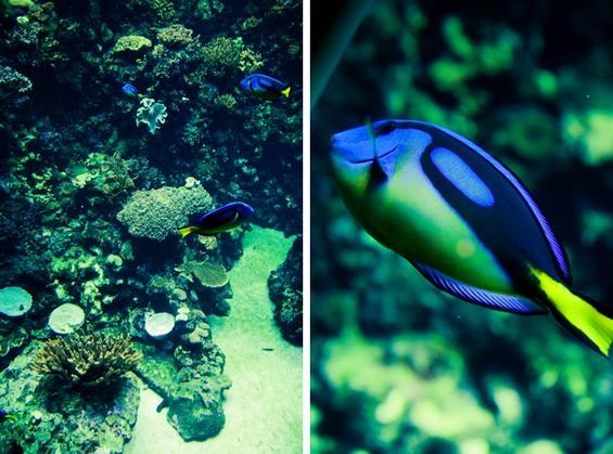 les poissons de l'aquarium