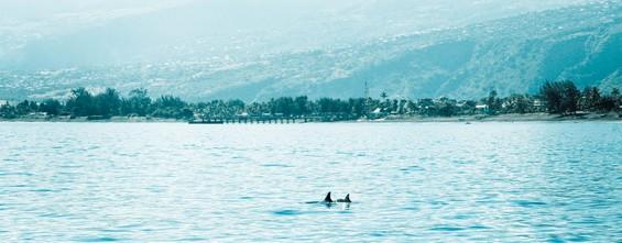 des dauphins !