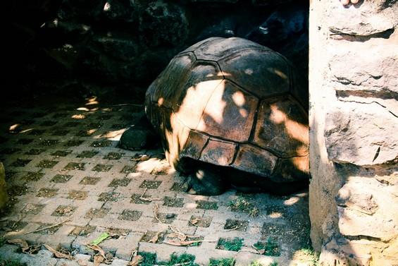 centre d'étude de découverte des tortues marines.