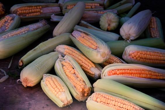 épis de maïs