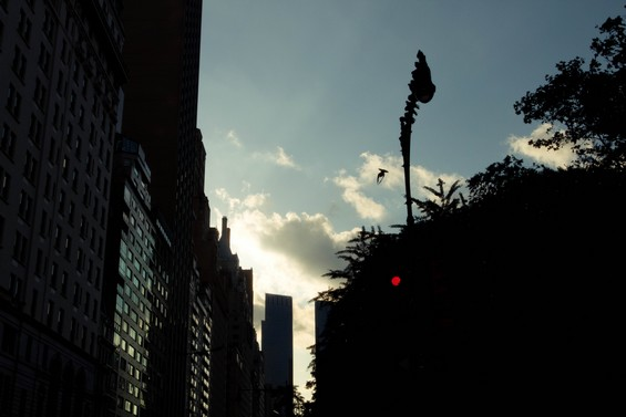 Soleil couchant sur Central Park