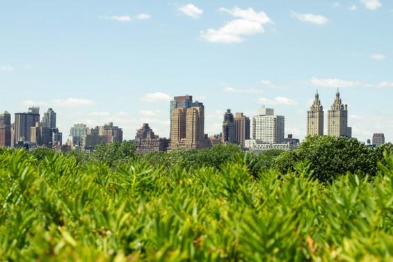 Du coté de Central Park
