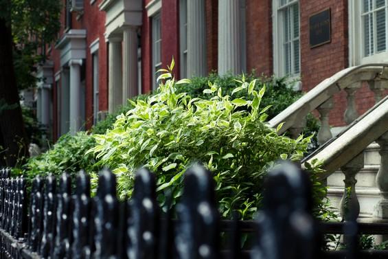 Entre brique et verdure, devanture de maisons
