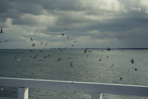sea and birds
