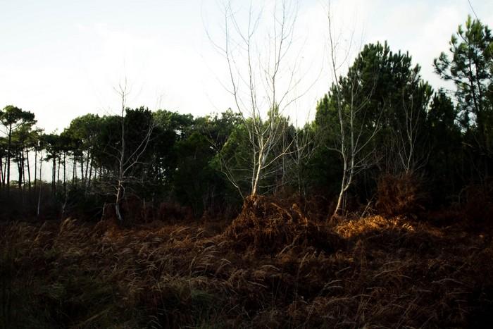 Le Cap Ferret, balade en forêt