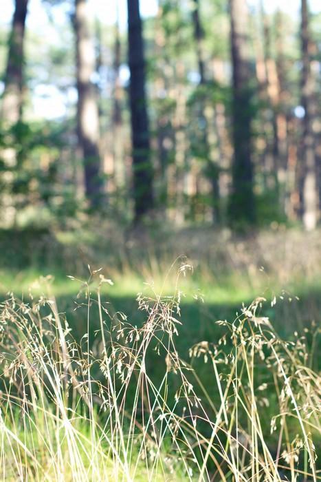 Bydgoszcz forest