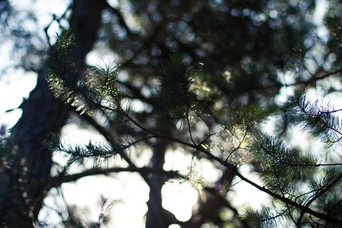 Forêt polonaise