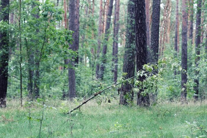 Polska forest