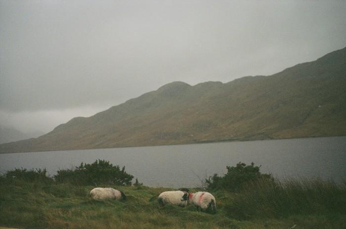 l'Irlande (51)
