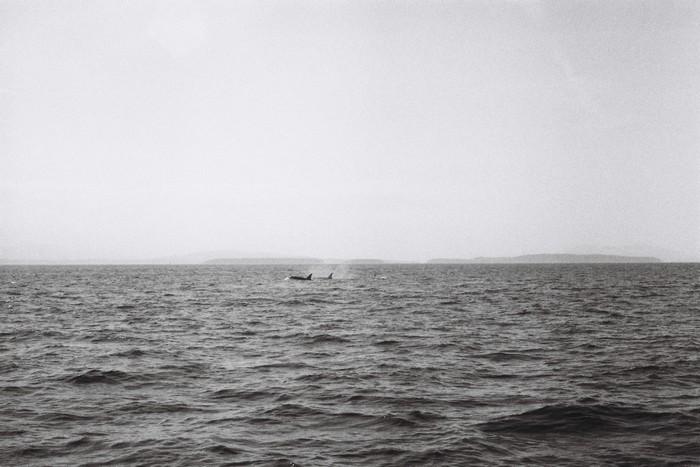San Juan Island (14)