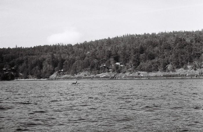 San Juan Island (15)