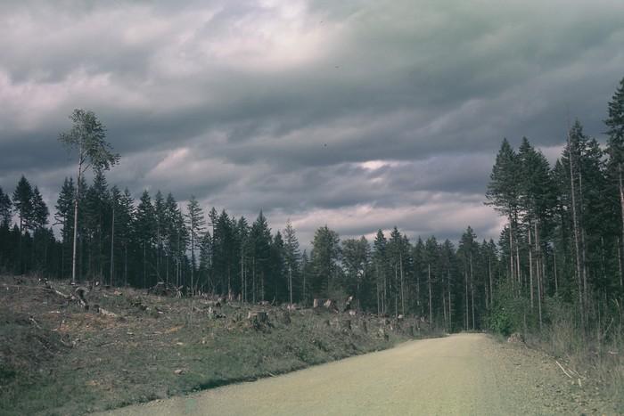Lake Cushman (17)