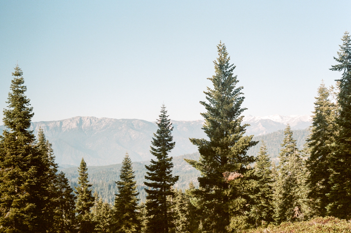 A l'ombre de Sequoia National Park.
