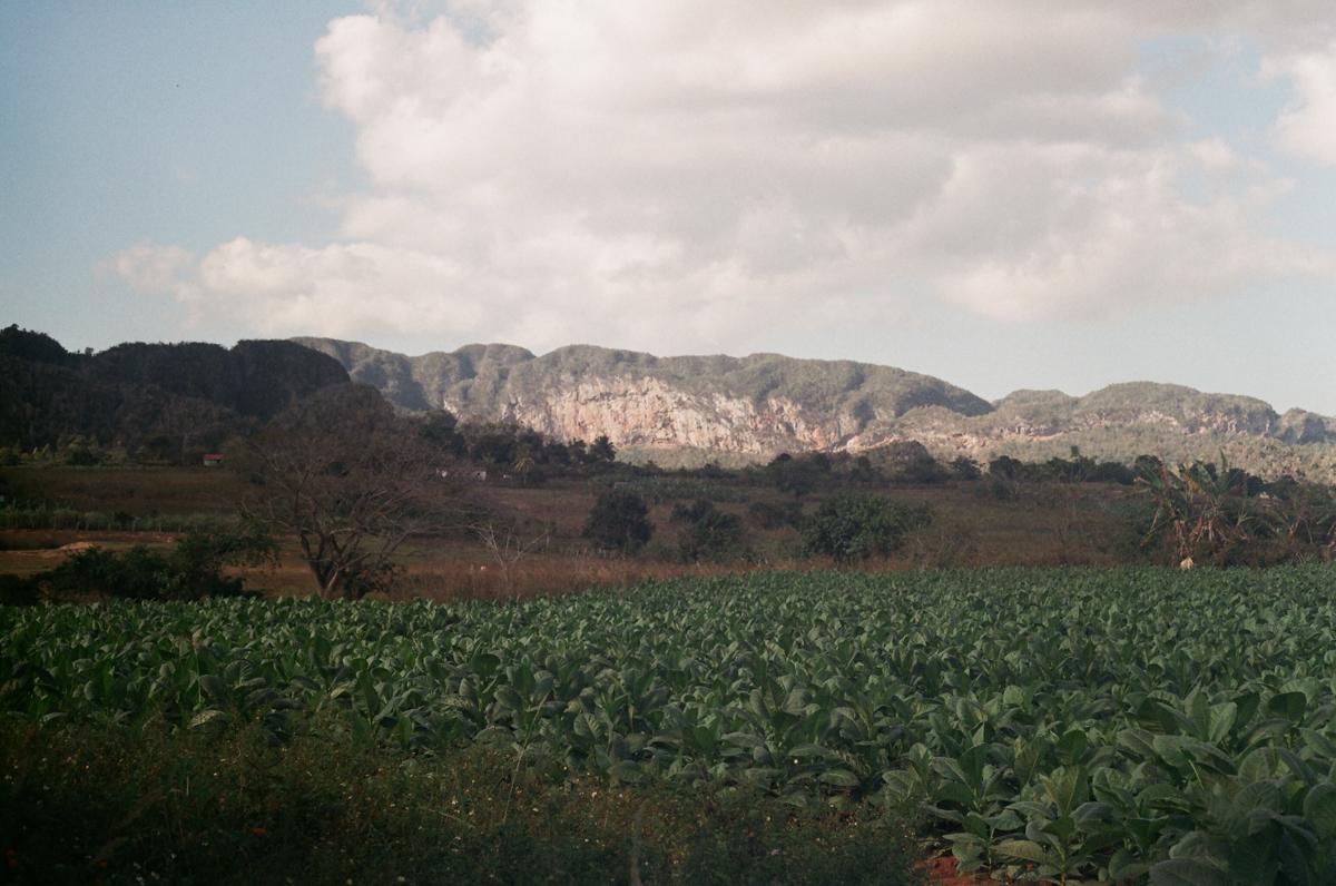 La Vallée de Viñales, cuba