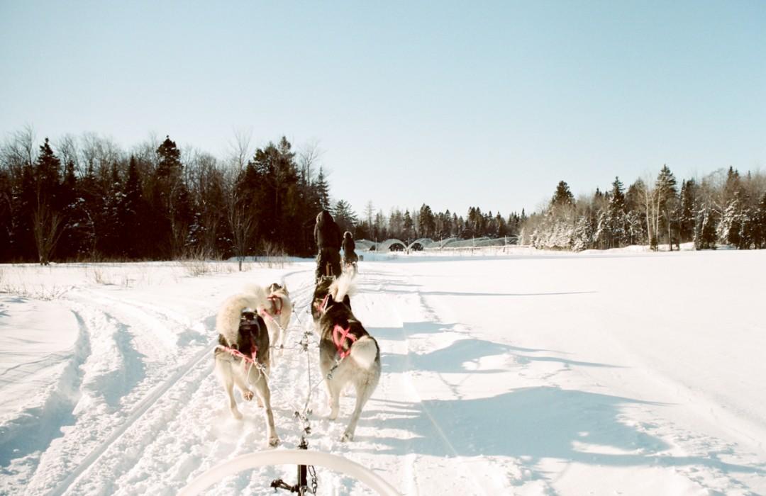 Escapade en chiens de traineau, la douceur hivernale québécoise !