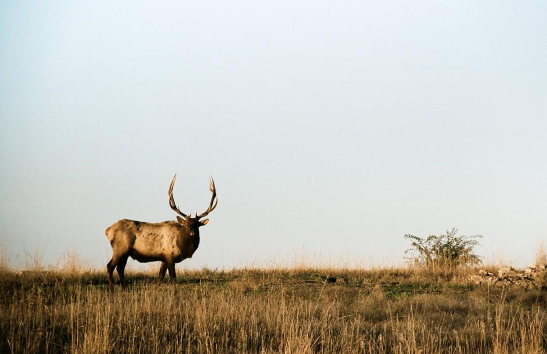 S'aventurer au coeur de National Bison Range.