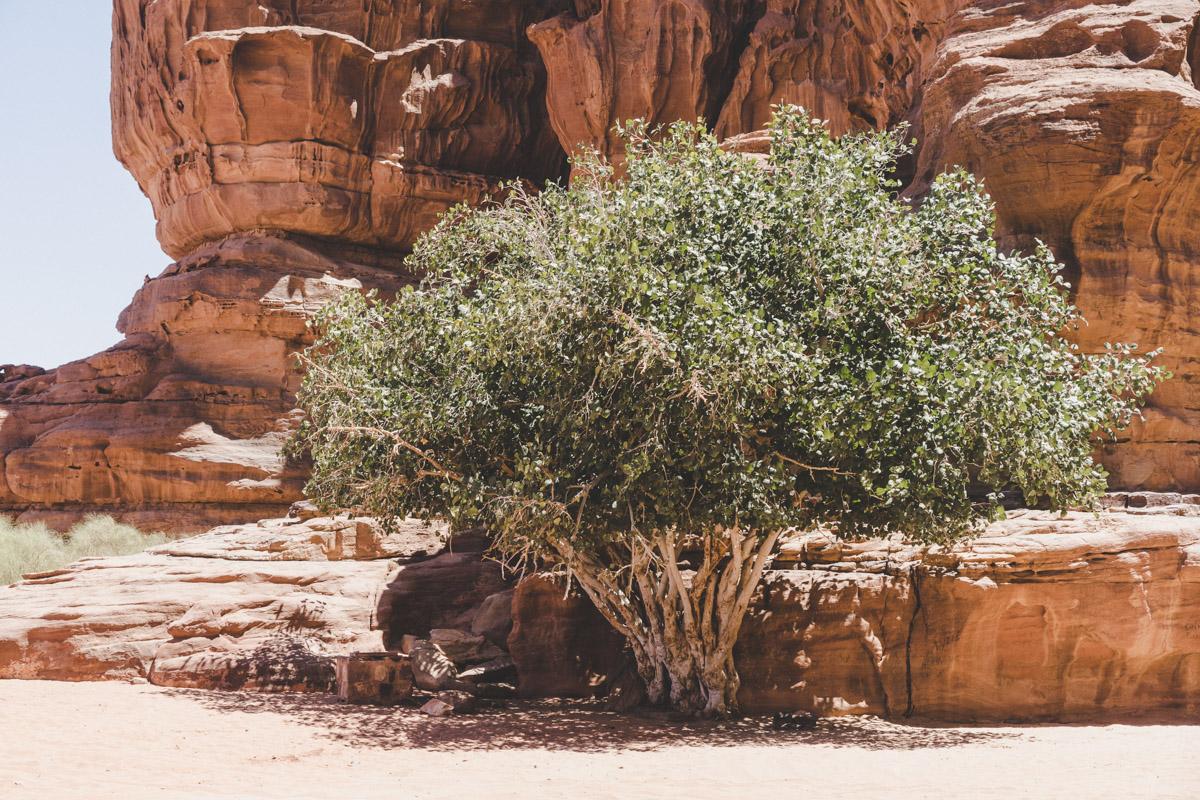Explorer le désert du Wadi Rum, Canyon de Khazali.